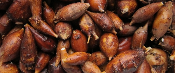 groundnuts-closeup